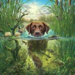 Kutya Úszik a Tóban – számfestő készlet