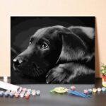 Fekete Labrador – számfestő készlet