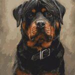 Rottweiler – számfestő készlet