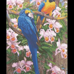Papagájok – számfestő készlet
